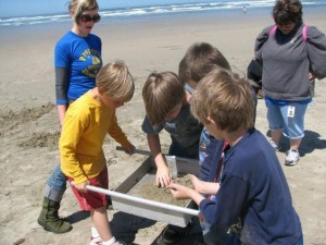 Hillcrest Elementary second graders sieving sand in search of beach hoppers. (Trish Mace)
