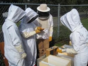 Kennedy+beekeepers