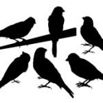 bird-silohuettes